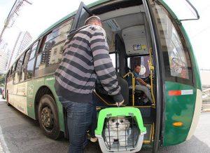 São Paulo terá guia de como transportar animal de estimação em ônibus, carro, bicicleta, táxi e aplicativo